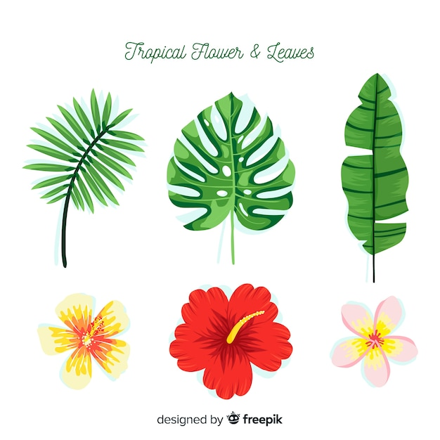 Tropical flowers and leaves Free Vector