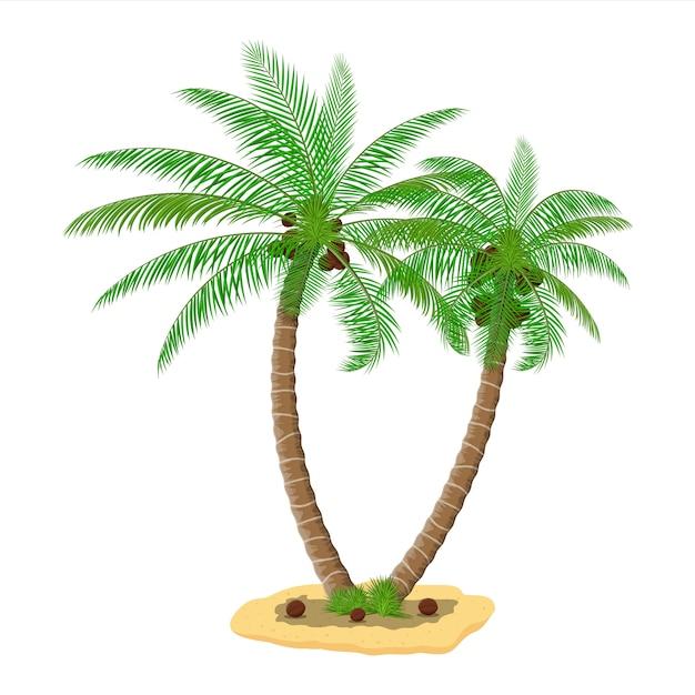 Tropical green palm. jungle leaves Premium Vector