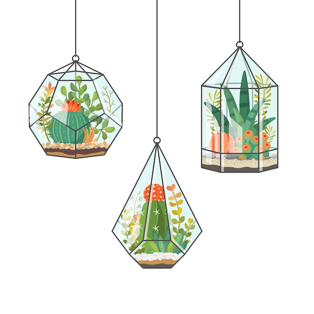 Tropical house plants and cactus in hanging terrariums Premium Vector