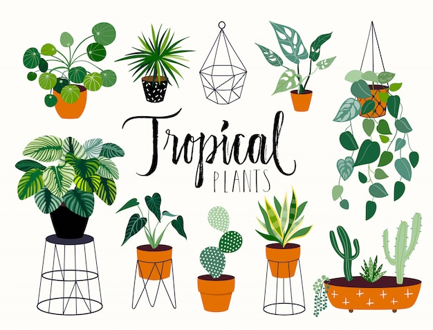 Tropical house plants collection with different elements, isolatedand hand lettering Premium Vector