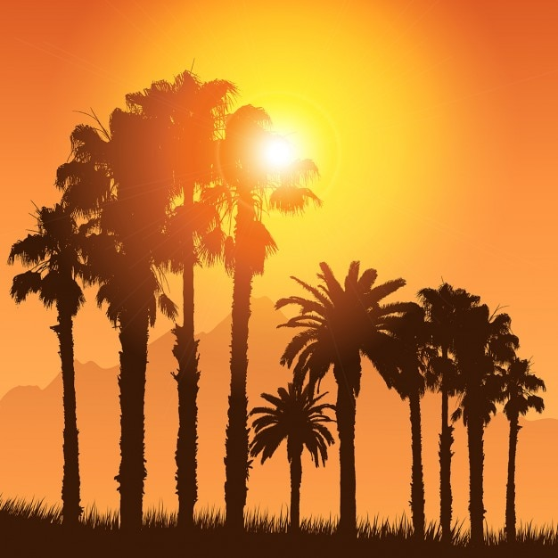 Tropical landscape with silhouettes of palm\ trees against a sunset sky