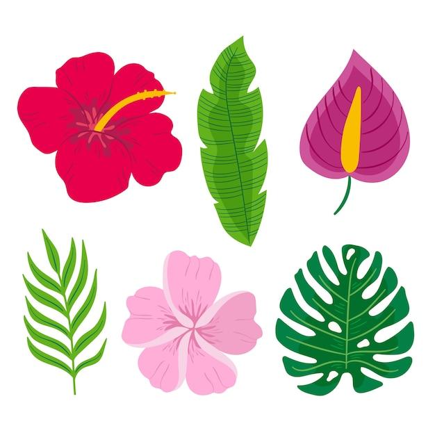 Concetto tropicale della raccolta del fiore e della foglia Vettore gratuito