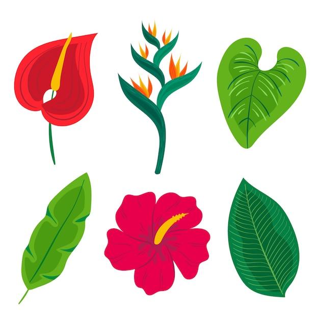 Tema tropicale per la raccolta di foglie e fiori Vettore gratuito