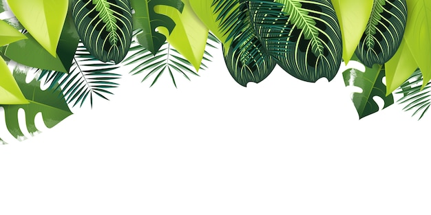 Premium Vector Tropical Leaves Background Tropical rain forests inhabit the equatorial belt, and are characterized by intense sunlight, heat and the forest floor is littered with leaves and decaying vegetation. https www freepik com profile preagreement getstarted 7492263