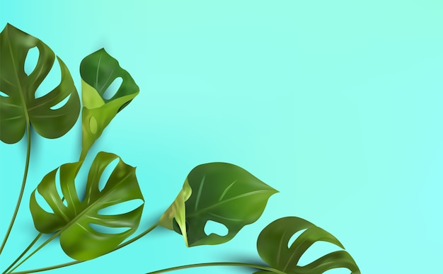 Tropical leaves on a blue background, tropical foliage monstera with split-leaf foliage that grows in the wild. Premium Vector