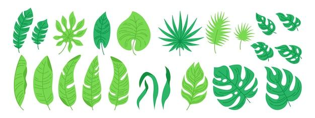 Набор мультфильм тропических листьев. экзотическая абстрактная листва, плоские растения. монстера, пальма и дикий лист Premium векторы