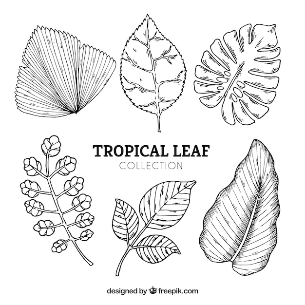 Free Vector Tropical Leaves Collection In Hand Drawn Style We recommend painting just a hair outside your pencil lines so that you don't see the pencil in the final. vector tropical leaves collection
