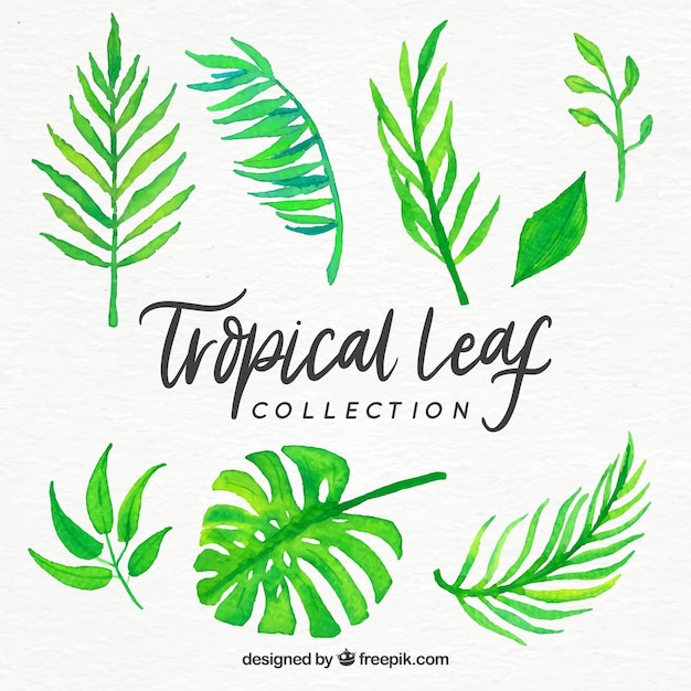 Tropical leaves collection in watercolor\ style