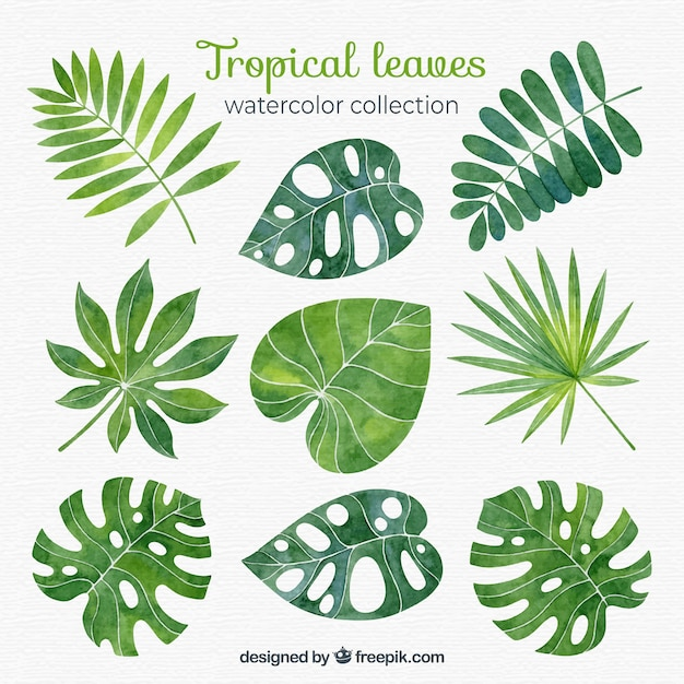 Tropical leaves collection in watercolor style Free Vector