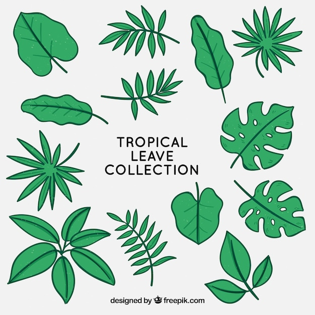 Free Vector Tropical Leaves Collection Free for commercial use no attribution required high quality images. free vector tropical leaves collection