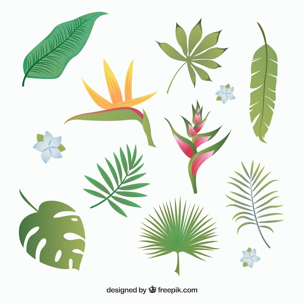 Premium Vector Tropical Leaves Collection Download all photos and use them even for commercial projects. https www freepik com profile preagreement getstarted 2856680