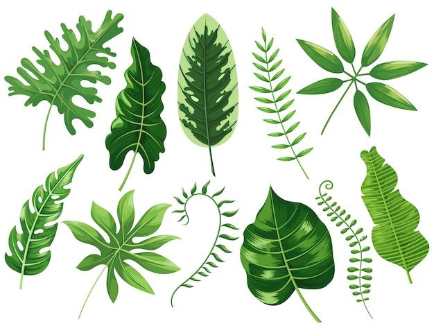 Premium Vector Tropical Leaves Exotic Tropic Leaf Botanic Rainforest And Tropics Travel Leafs Painting Cartoon Isolated Illustration Set