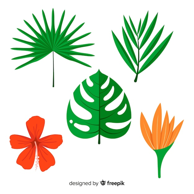 Tropical leaves and flowers Free Vector