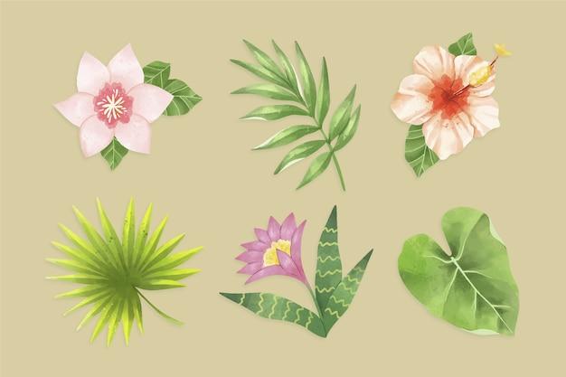 Foglie tropicali isolati su sfondo Vettore gratuito