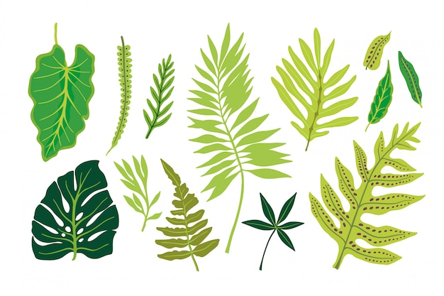 Tropical leaves. palm leaves and exotic plants. Premium Vector