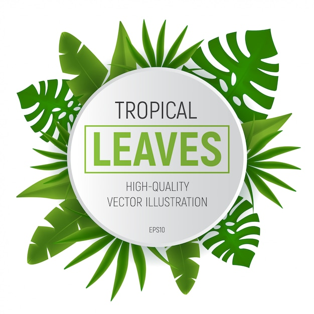 Premium Vector Tropical Leaves Round Frame With Green Palm Tree Leaf Illustration Isolated The design also has a white frame and lots of space to add images or text. https www freepik com profile preagreement getstarted 8216734