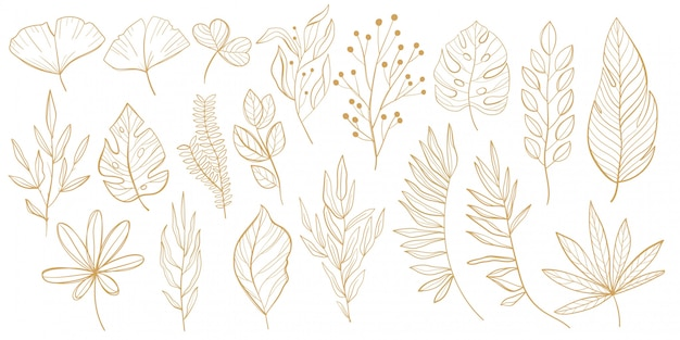 열 대 잎 세트 팜, 팬 팜, 몬스 테라, 바나나는 선 스타일에 나뭇잎. 디자인에 대 한 열 대 잎의 스케치 프리미엄 벡터