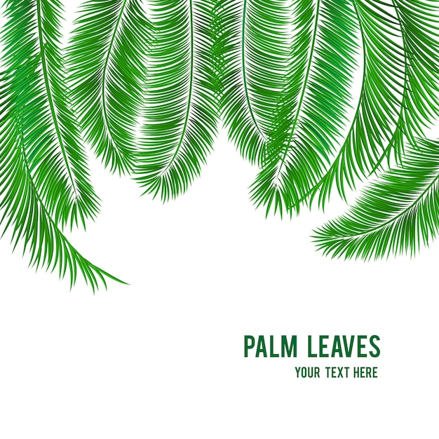 Tropical palm tree background banner Free Vector