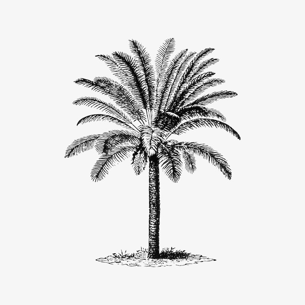 Tropical palm tree Free Vector