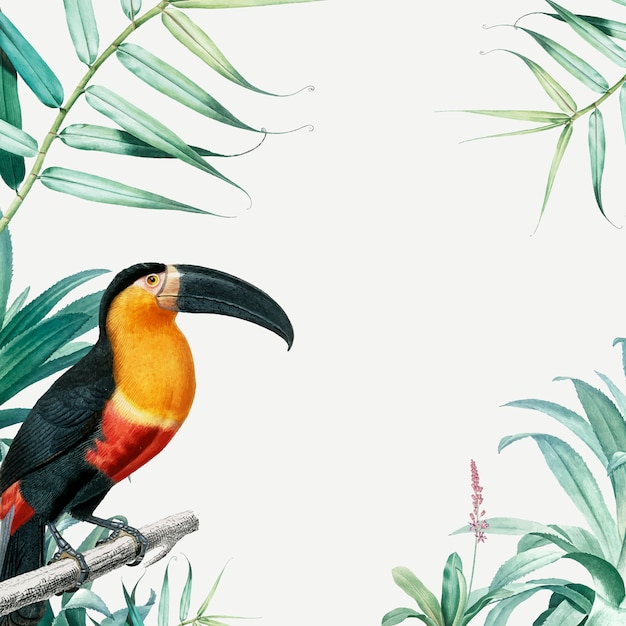 Tropical parrot frame Free Vector