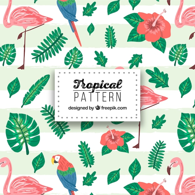 tropical pattern with plants and birds