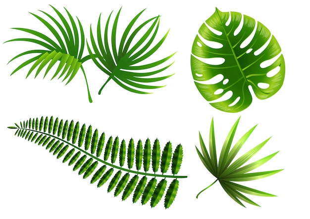 Tropical plant leaves set. monstera, fern, palm, yucca. Free Vector
