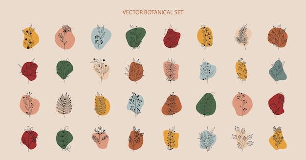 Тропические растения, листья и ветви с цветами, набор элементов ботаника с кругами разного цвета Premium векторы