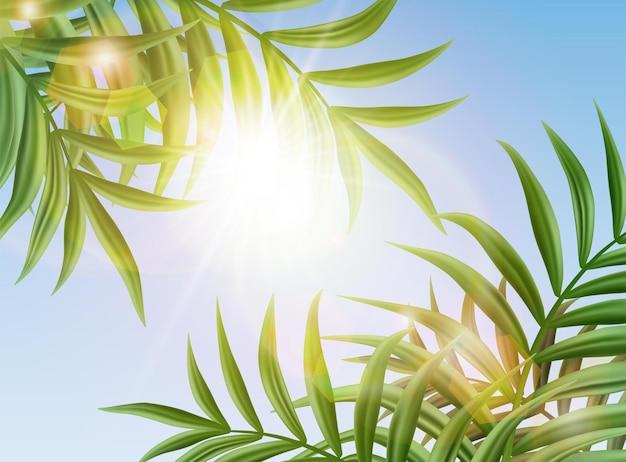 Фон тропического неба с пальмовыми листьями и сияющим солнцем. Бесплатные векторы