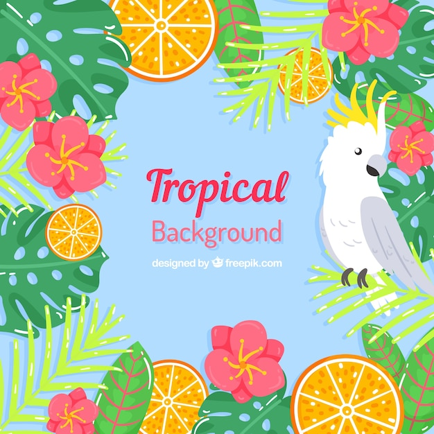 Tropical summer background with bird and\ flowers