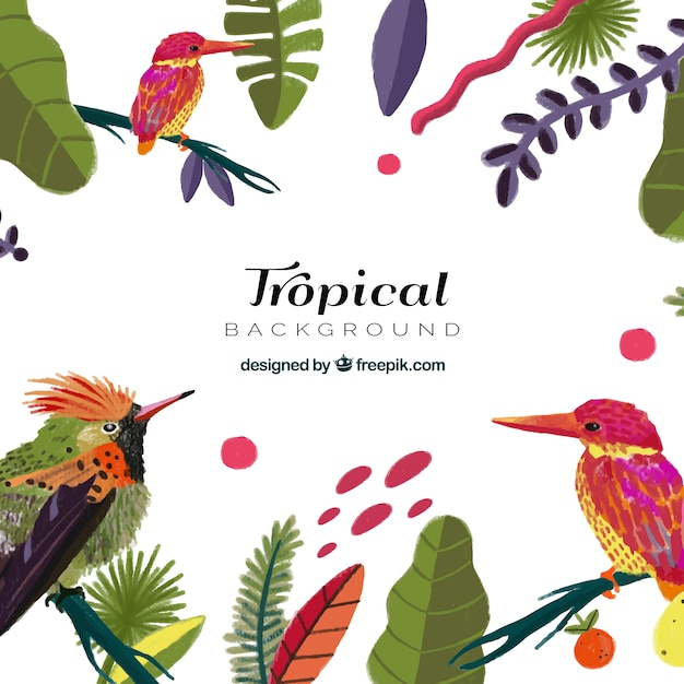Tropical summer background with exotic\ birds