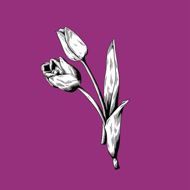 Tulip drawing flower nature vector icon on\ purple background