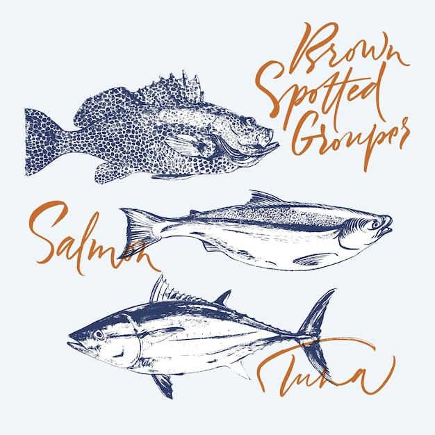 Tuna, salmon, brown spotted grouper Premium Vector