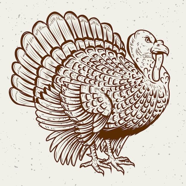 白い背景の上のトルコのイラスト。感謝祭のテーマ。ポスター、グリーティングカードの要素。図 Premiumベクター