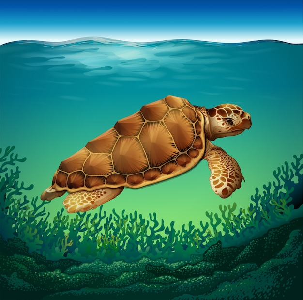 Turtle in the sea Free Vector