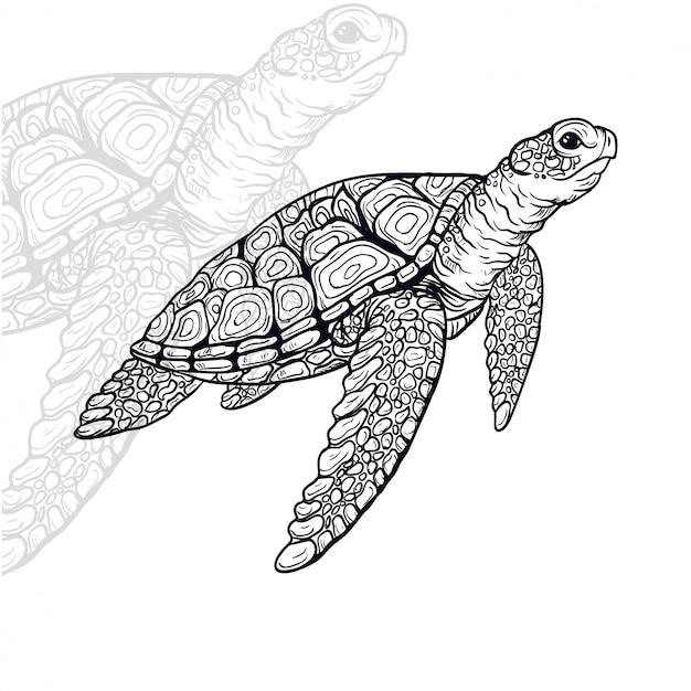 Черепаха векторная иллюстрация Premium векторы