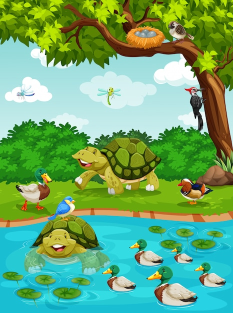 Turtles and ducks at the river Free Vector