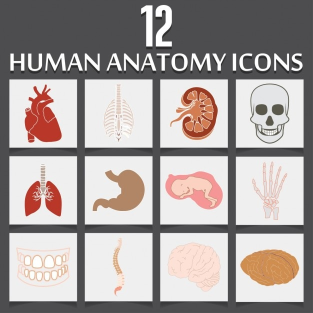 Twelve Icons About Human Anatomy Vector Free Download