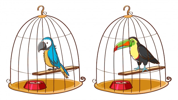 Two birds in bird cages Free Vector