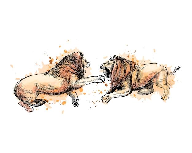 水彩のスプラッシュから2つの戦いのライオン、手描きのスケッチ。塗料のイラスト Premiumベクター