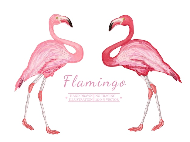 Two flamingo, hand drawn vectorized illustration Premium Vector