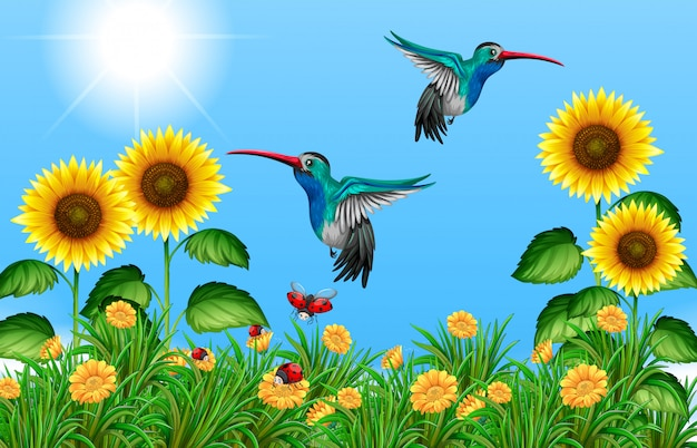 Two hummingbirds flying in sunflower field Premium Vector