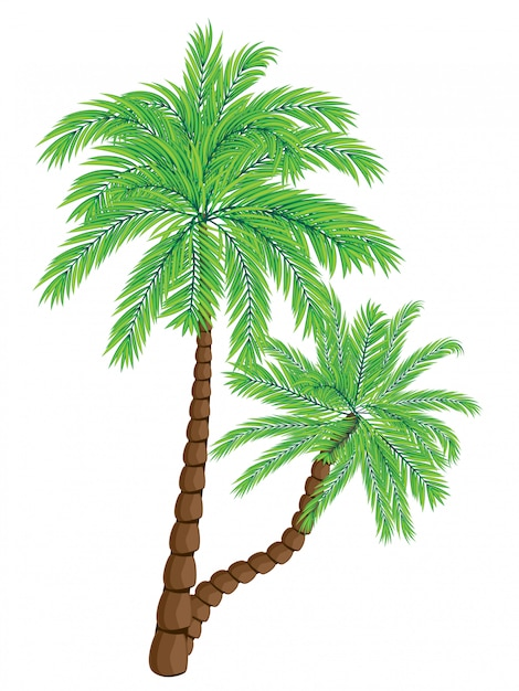 Two palm trees Premium Vector
