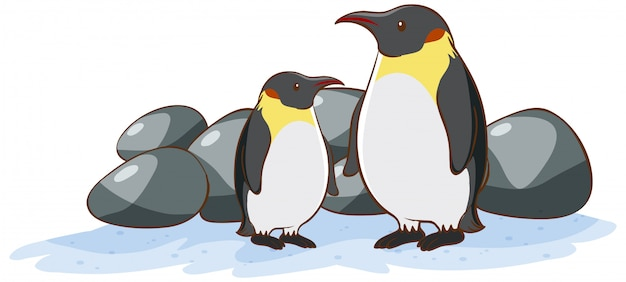 Two penguins on white Free Vector