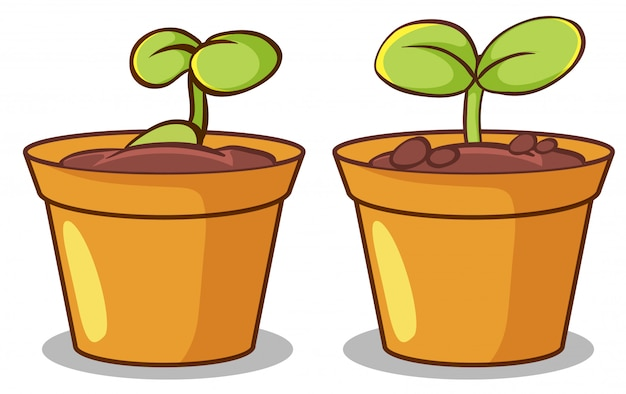 Two pots of plants Free Vector