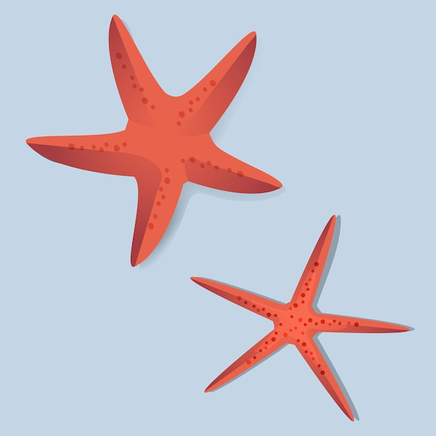 Two red starfish vector illustrarion Free Vector