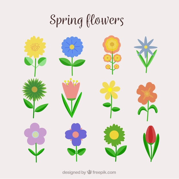 types flower set vector  free download, Beautiful flower