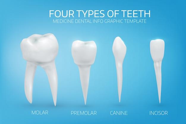 Типы человеческих зубов на синем фоне Premium векторы