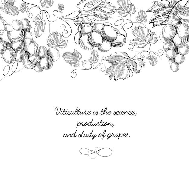 Типография декоративный дизайн карты каракули с надписью, что виноградарство - это наука Бесплатные векторы