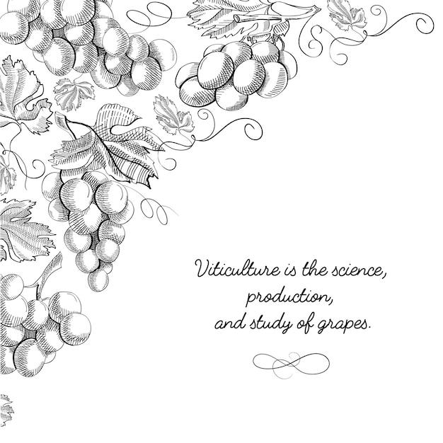 Doodle di carta di design tipografia con iscrizione che la viticoltura è scienza Vettore gratuito