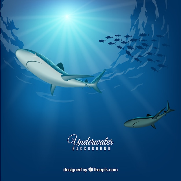 Underwater background with sharks in realistic style Free Vector